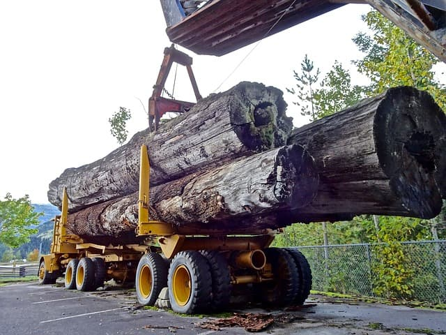 Huge logs lifted onto a truck